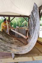 pulling up birchbark